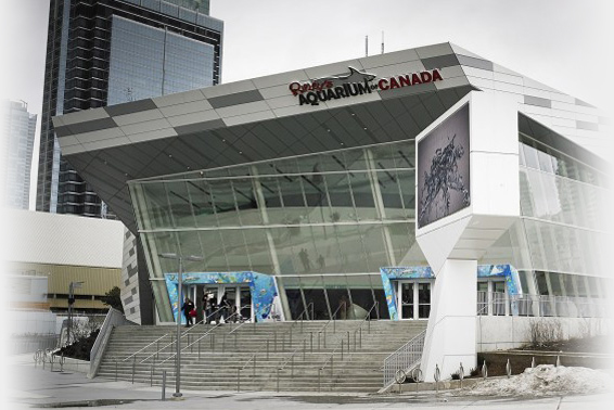 Hotels Near Toronto Ripleys Aquarium